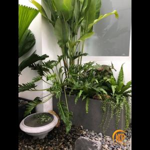 fertilize ornamental plants