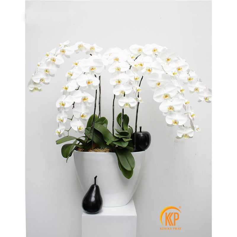 mẫu hoa lan hồ điệp trag trí nội thất ngoại thất