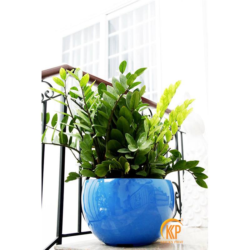 các loại cây xanh trong nhà