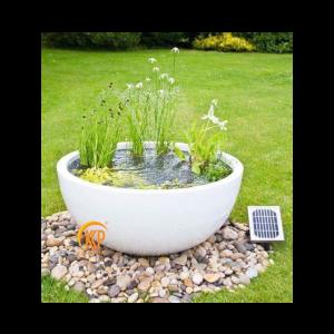 trồng cây cảnh quan sân vườn
